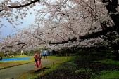 日本九州春櫻尊爵全覽之旅-1_福岡市舞鶴公園-綻放春櫻:A81Q5693.JPG