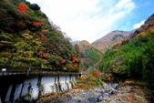 日本四國人文藝術+楓紅深度之旅-別府峽楓葉散策53-23:A81Q0025.JPG