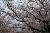 日本九州春櫻尊爵全覽之旅-1_福岡市舞鶴公園-綻放春櫻:A81Q5716.JPG