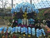 日本關西賞櫻深度之旅-鳥取花迴廊42-8:IMG_2395.JPG