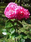 塞爾維亞SERBIA_貝爾格勒BELGRADE采風:DSC01359塞爾維亞_貝爾格勒BELGRADE_花卉.jpg