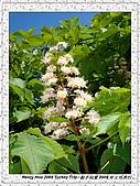 番紅花城Safranbolu:DSC09748 Flowers 花朵_20090512.JPG