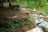 15-5-峇里島-Safari Marine Park野生動物園:IMG_1098峇里島-Safari Marine Park野生動物園.jpg