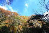 日本四國人文藝術+楓紅深度之旅-別府峽楓葉散策53-23:A81Q0048.JPG