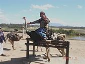 南非探索之旅:DSC01632南非-開普敦-駝鳥園