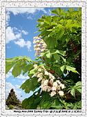 番紅花城Safranbolu:DSC09749 Flowers 花朵_20090512.JPG