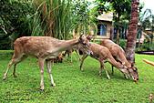 15-5-峇里島-Safari Marine Park野生動物園:IMG_1281峇里島-Safari Marine Park野生動物園.jpg