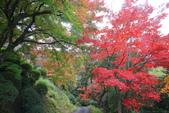 日本四國人文藝術+楓紅深度之旅-金刀比羅宮楓紅盛開秘境 53-33:A81Q0270.JPG