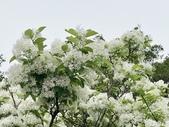 杜鵑花展在大安森林公園:20210304_153025-uid-49490D0B-1DD1-410B-A798-422E6B4C13B4-8559342.jpg