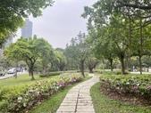 杜鵑花展在大安森林公園:20210304_153341-uid-87A89F2B-A520-4B30-95FC-6C028553B0BF-10642038.jpg