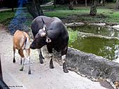 15-5-峇里島-Safari Marine Park野生動物園:IMG_6523峇里島-Safari Marine Park野生動物園.jpg