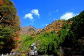 日本四國人文藝術+楓紅深度之旅-別府峽楓葉散策53-23:A81Q0059.JPG