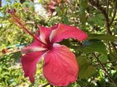 我家花園的花卉:20200315_123520-uid-F9A25161-AE22-4BCF-B778-BA5A17792B89.jpeg