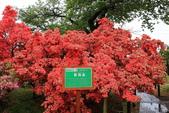 日本12天賞紫藤....VIP團之旅34-34笠間杜鵑花公園:A81Q8335.JPG