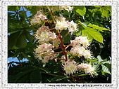 番紅花城Safranbolu:DSC09751 Flowers 花朵_20090512.JPG