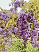 紫藤咖啡園-淡水二店:20210322_123124-uid-445999D8-071A-481E-9902-EEE9E34230E4-7676677.jpg