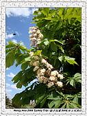 番紅花城Safranbolu:DSC09752 Flowers 花朵_20090512.JPG
