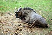 15-5-峇里島-Safari Marine Park野生動物園:IMG_1114峇里島-Safari Marine Park野生動物園.jpg