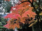 日本四國人文藝術+楓紅深度之旅-金刀比羅宮楓紅盛開秘境 53-33:IMG_6382.JPG