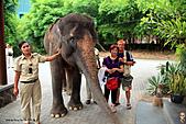 15-5-峇里島-Safari Marine Park野生動物園:IMG_1204峇里島-Safari Marine Park野生動物園.jpg