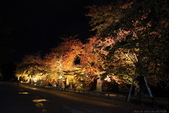 日本北關東東北行-8弘前城-櫻花紅葉園區驚豔楓紅.....:A81Q0702.JPG