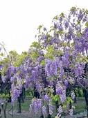 紫藤咖啡園-淡水二店:20210322_132853-uid-31B87CC5-6BEB-4B56-A998-61EAA59BA66F-4710586.jpg