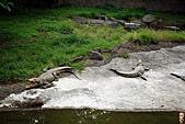 15-5-峇里島-Safari Marine Park野生動物園:IMG_1099峇里島-Safari Marine Park野生動物園.jpg