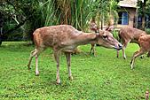15-5-峇里島-Safari Marine Park野生動物園:IMG_1282峇里島-Safari Marine Park野生動物園.jpg