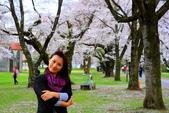 日本12天賞紫藤....VIP團之旅34-17 百年老欉櫻花在牧場內飄飄櫻吹雪...:A81Q6825.JPG