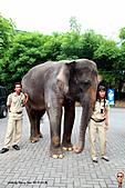 15-5-峇里島-Safari Marine Park野生動物園:IMG_1205峇里島-Safari Marine Park野生動物園.jpg