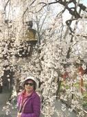 日本關西賞櫻深度之旅-平野神社- 42-22:IMG_3477.JPG