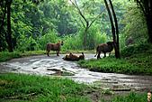 15-5-峇里島-Safari Marine Park野生動物園:IMG_1262峇里島-Safari Marine Park野生動物園.jpg