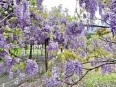 紫藤咖啡園-淡水二店:20210322_133804-uid-C765D1B5-9837-41EC-8932-0B6C94DAC271-8863281.jpg
