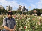 蜀葵花海開在古亭河濱公園2020.05.03:S__4153352.jpg