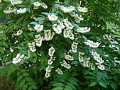 塞爾維亞SERBIA_貝爾格勒BELGRADE采風:DSC01300塞爾維亞_貝爾格勒BELGRADE_花卉.JPG