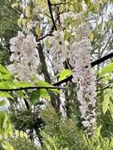 紫藤咖啡園-淡水二店:20210322_135348-uid-524B022C-F294-425A-B7A2-432041877B18-4815904.jpg