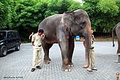 15-5-峇里島-Safari Marine Park野生動物園:IMG_1206峇里島-Safari Marine Park野生動物園.jpg