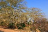 南部非洲32天探索之旅-馬拉威MALAW 6-5-5里旺國家公園狩獵巡禮:IMG_1866.JPG