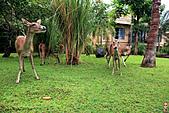 15-5-峇里島-Safari Marine Park野生動物園:IMG_1283峇里島-Safari Marine Park野生動物園.jpg