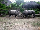15-5-峇里島-Safari Marine Park野生動物園:IMG_6567峇里島-Safari Marine Park野生動物園.jpg