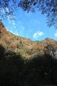 日本四國人文藝術+楓紅深度之旅-別府峽楓葉散策53-23:A81Q0053.JPG