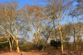 南部非洲32天探索之旅-馬拉威MALAW 6-5-5里旺國家公園狩獵巡禮:IMG_1868.JPG