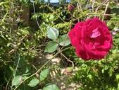我家花園的花卉:20200315_124023-uid-4EABB8C2-CDEE-48B2-A25B-5A0DC20F1151.jpeg