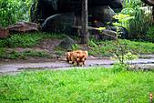 15-5-峇里島-Safari Marine Park野生動物園:IMG_1240峇里島-Safari Marine Park野生動物園.jpg