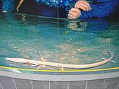 斯洛凡尼亞_波斯多瓦那POSTOJNA_鐘乳石洞:DSC00585斯洛維尼亞_鐘乳石洞內稀有動物-娃娃魚.JPG