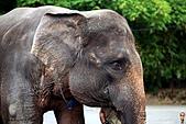 15-5-峇里島-Safari Marine Park野生動物園:IMG_1207峇里島-Safari Marine Park野生動物園.jpg