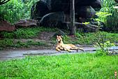 15-5-峇里島-Safari Marine Park野生動物園:IMG_1263峇里島-Safari Marine Park野生動物園.jpg