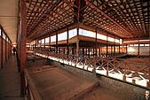 19-17塞普路斯-帕佛斯PAROS-考古遺跡區域UNESCO 1980年-海神之家:IMG_4268塞普路斯-拉那卡-PAROS考古遺跡區域UNESCO-酒神之家HOUSE OF DIONYSUS.jpg