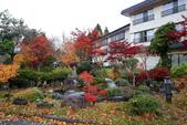 日本北關東東北行-4十和田湖飯店及周邊彩繪森林隧道的再次驚豔: