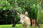 15-5-峇里島-Safari Marine Park野生動物園:IMG_1284峇里島-Safari Marine Park野生動物園.jpg